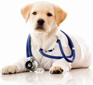 Собака ветеринар