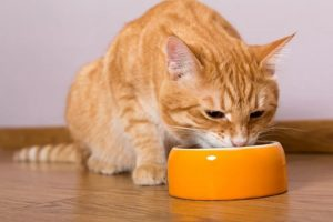Оранжевая миска и рыжий кот