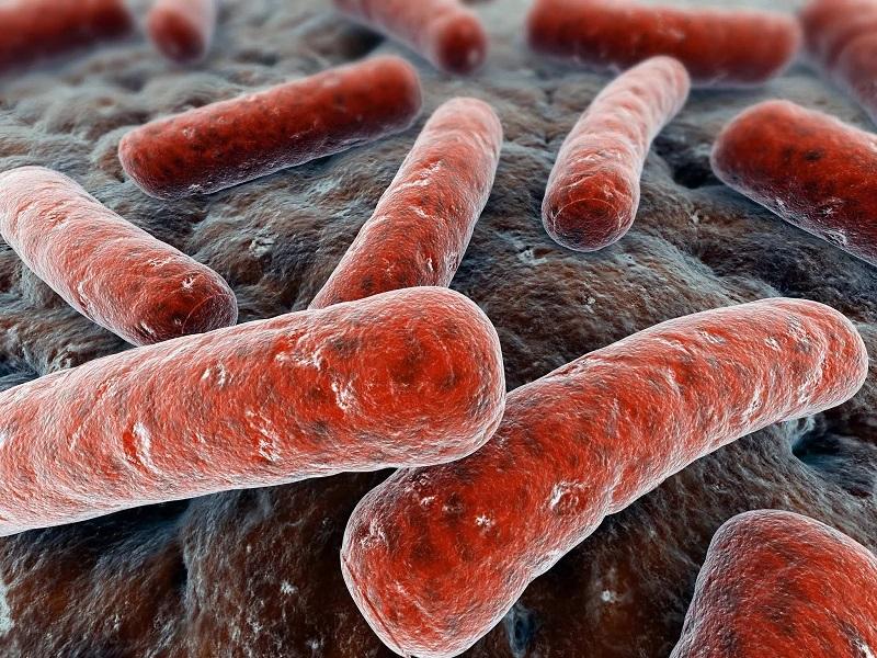 Возбудитель туберкулеза под микроскопом