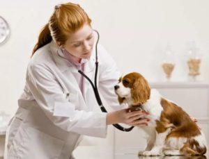 Ветеринар диагностирует общее состояние животного