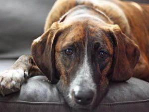 Домашнее животное испытывает недомогание