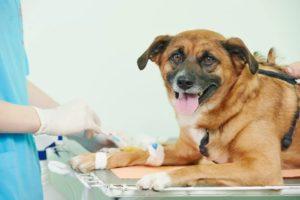 Лечение собаки в условиях стационара